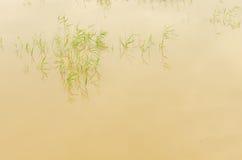 Cañas y reflexión del agua Fotos de archivo