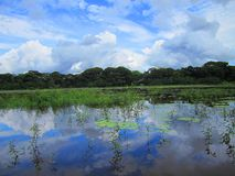 Caño Negro Wild Life Refuge Costa Rica, Tropical wetlands Stock Image