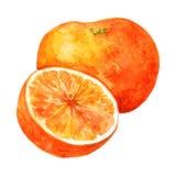 Cała pomarańcze i połówka ilustracja wektor