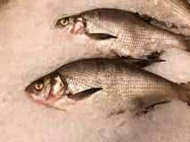 Cała ryba z waży i głowa soczysty wyśmienicie zazębiony marznący świeżej ryba tło mali kawałki zimno jasnego lód zdjęcie stock