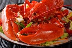 Całość gotującego homara słuzyć z jarzynowym sałatkowym zakończeniem Horiz obrazy royalty free