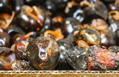 Całość suszącego Chile Cascabel lub brzęku Chili pieprz w kartonie przy meksykanina rynkiem - selekcyjna ostrość Obrazy Royalty Free