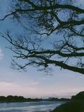 Całuje ciebie pod drzewem obrazy royalty free