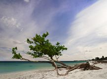 cały dzień na plaży czasu drzewa obraz royalty free