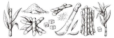 Ca?a de az?car exhausta de la mano Hojas y bastones, plantación orgánica natural del azúcar, planta del bosquejo de la caña de az stock de ilustración