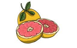 Cała grapefruitowa ilustracja Zdjęcia Royalty Free