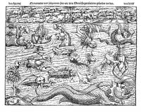 1550 ca., illustration of sea monsters Royalty Free Stock Image