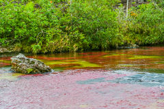 Caño Cristales Images stock