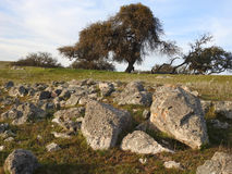 Ca Oak and Rocks Royalty Free Stock Photos