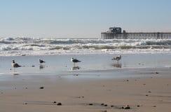 ca-oceansidepir Fotografering för Bildbyråer