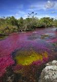 Cañoen Cristales, en av de mest härliga floderna i världen Royaltyfri Bild