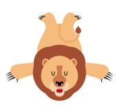 Caçador do troféu do tapete da pele do leão Predador de leo do africano f Imagem de Stock