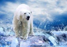 Caçador do urso Foto de Stock Royalty Free
