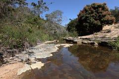Caatinga河风景在巴西 免版税图库摄影