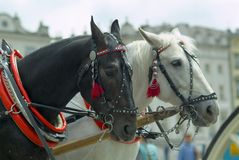 Cab's horses Stock Photos