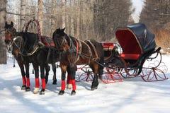 cab som kör hästar Arkivbild