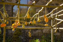 Cabaças da polpa da queda que secam no Sun Imagens de Stock Royalty Free