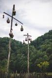 Cabaças de suspensão do pássaro Foto de Stock Royalty Free