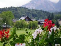 Cabaña de madera de Suiza con la flor Fotos de archivo libres de regalías