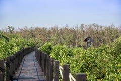 Cabaña de madera en el bosque del mangle Imágenes de archivo libres de regalías