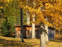 Cabaña de madera en el medio del bosque rodeado con los colores de oro de las fotos de la Caída-acción Imágenes de archivo libres de regalías