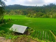 Cabaña del arroz Foto de archivo