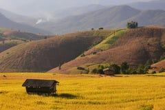 Cabaña en campo amarillo Imagen de archivo