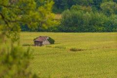 Cabaña en campo de maíz Imagen de archivo libre de regalías