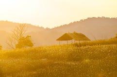 Cabaña en el campo de flores Fotografía de archivo libre de regalías