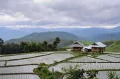 Cabaña entre campo joven del arroz en la terraza del arroz, mountai hermoso imagen de archivo libre de regalías