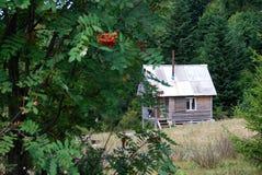 Cabaña sola del bosque Fotos de archivo