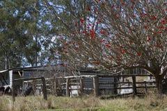 Cabaña vieja en un prado con el árbol floreciente rojo Foto de archivo