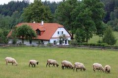 Cabaña y ovejas Imágenes de archivo libres de regalías