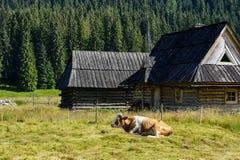 Cabaña y vaca rurales de la colocación en el valle de la montaña Fotografía de archivo libre de regalías
