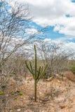 Cabaceiras, ParaÃba, Brazilië - Februari, 2018: Weg aan oneindig met Cactus in een Caatinga-Bioma bij ten noordoosten van Brazili royalty-vrije stock foto's