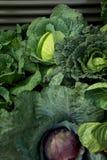 cabages arbeta i trädgården grönsaken Fotografering för Bildbyråer