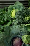 Cabages in a vegetable garden Stock Image