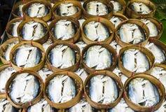 Caballa Foto de archivo libre de regalías