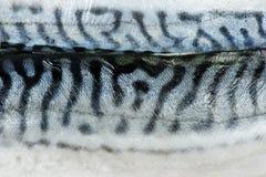 Caballa de los pescados de la textura imagenes de archivo
