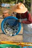Caballa en cesta. Fotografía de archivo libre de regalías