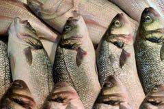 Caballa en el mercado de pescados Foto de archivo