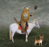 Caballero del gato en un caballo con un macis fotos de archivo