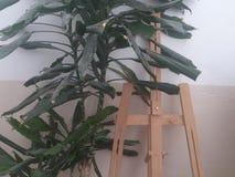 Caballete de madera entre las hojas del árbol de la casa Fotos de archivo