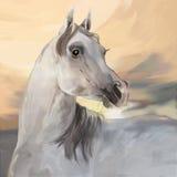 Caballo árabe gris ilustración del vector