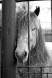 caballo Foto de archivo libre de regalías