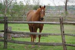 1 caballo Imágenes de archivo libres de regalías