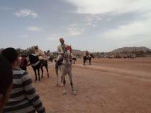 Caballo, Argelia imagen de archivo libre de regalías