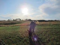 Caballo bajo puesta del sol imagenes de archivo