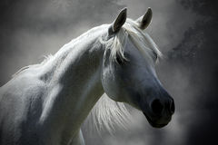 Caballo blanco Fotografía de archivo libre de regalías