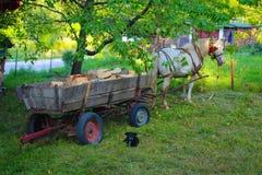 Caballo blanco con el coche de madera viejo en montaña del gora de Jelova en Serbia imagen de archivo libre de regalías